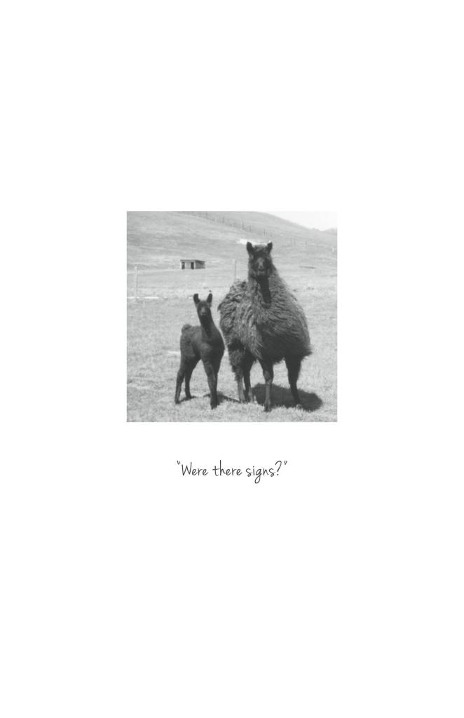 13.Page 6 Llamas